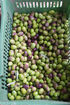 olives greece sithonia (9)