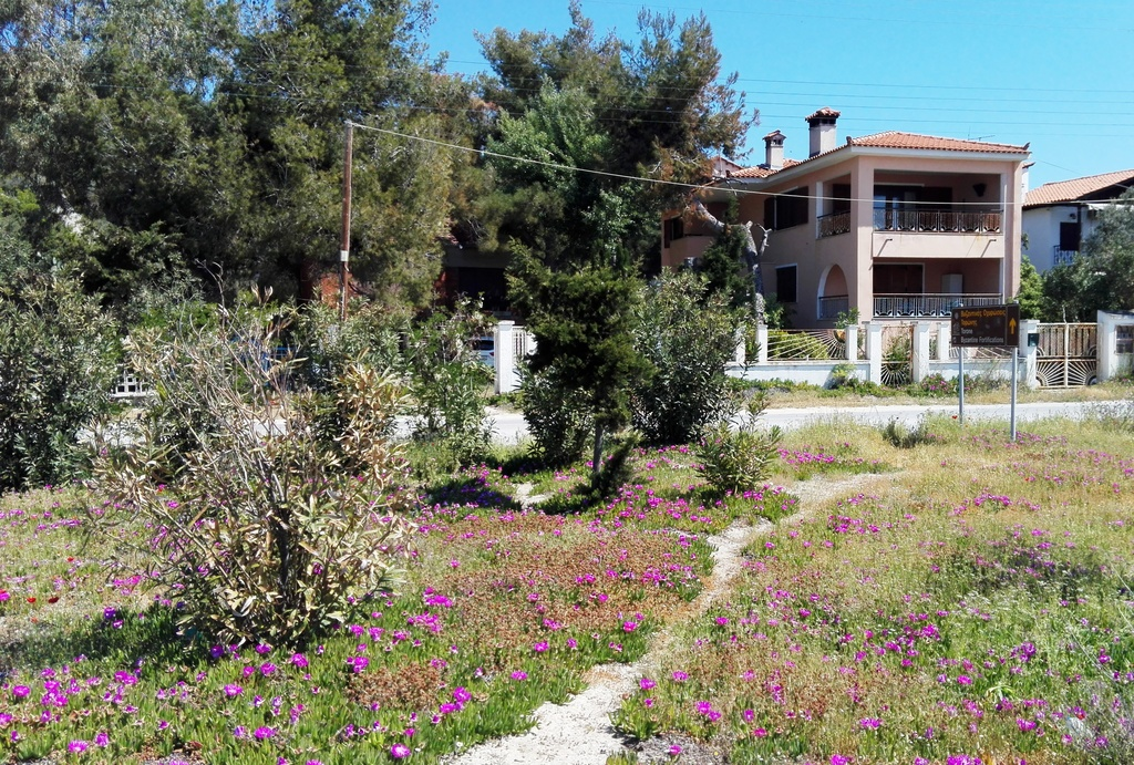 the pink oleander house toroni sithonia 23