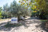 olive house elia  beach sithonia (14)