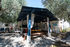 olive house elia  beach sithonia (8)